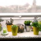 regnerisches Herbstfenster mit Fettpflanzen (Sukkulenten)