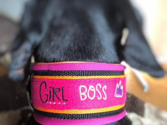 Hundehalsband für mein Mädel