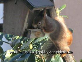 Eichörnchen Besuch