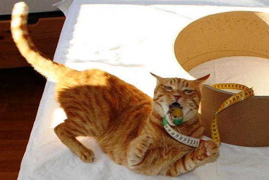 Katze Maßband DIY