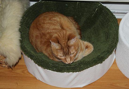 Katzenkorb unter der Heizung
