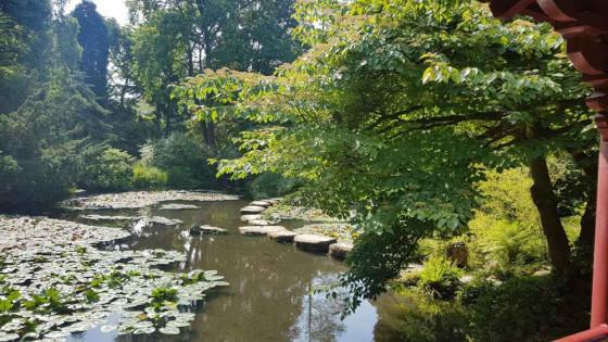 Spaziergang im Park Köln