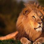Pattarina in der Höhle der Löwen bei VOX